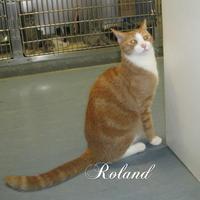 Adopt A Pet :: Roland - Allentown, PA
