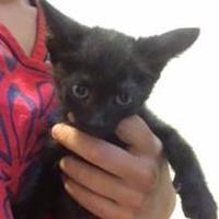 Adopt A Pet :: JACKSON - St. Thomas, VI