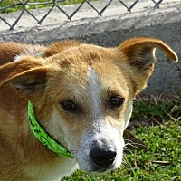Terrier (Unknown Type, Medium) Mix Dog for adoption in Corpus Christi, Texas - Donald