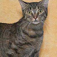 Adopt A Pet :: Clara - Elmwood Park, NJ