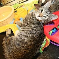 Adopt A Pet :: Tuffy - Rochester, MN