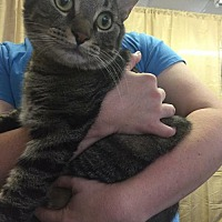 Adopt A Pet :: Charles - Asheville, NC