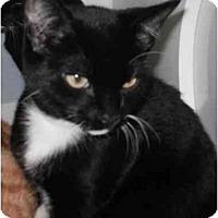 Adopt A Pet :: Apollo - Maywood, NJ