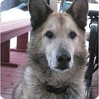 Adopt A Pet :: Jack - Loveland, CO