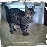 Adopt A Pet :: Buzz - Wanaque, NJ