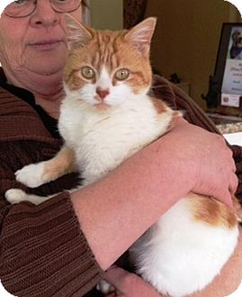 Domestic Shorthair Cat for adoption in Dover, Tennessee - Charlie