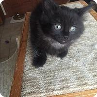 Adopt A Pet :: Freeway - Sterling Hgts, MI