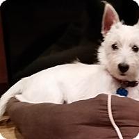 Adopt A Pet :: Puddin'-Pending Adoption - Omaha, NE