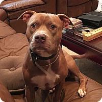 Adopt A Pet :: Krachy - Miami, FL