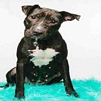 Adopt A Pet :: MAE - Houston, TX