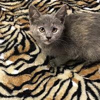 Adopt A Pet :: Kenzie - Butner, NC