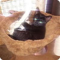 Adopt A Pet :: Sissy - Centerton, AR