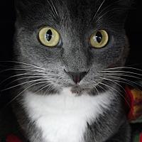 Adopt A Pet :: Malificent - Cloquet, MN
