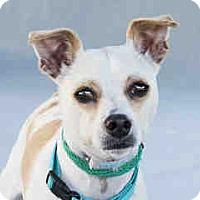 Adopt A Pet :: Sweet Pea - Agoura, CA
