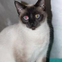 Adopt A Pet :: Wisteria - Covington, LA