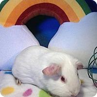Adopt A Pet :: Sadie - Trenton, NC