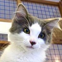 Adopt A Pet :: Edwin - Davis, CA