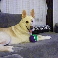 Adopt A Pet :: Gabriel -17 - Lithia, FL