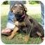 Photo 3 - German Shepherd Dog Mix Puppy for adoption in Mahwah, New Jersey - Charlie