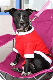 Terrier (Unknown Type, Medium)/Australian Cattle Dog Mix Dog for adoption in Alpharetta, Georgia - Grace