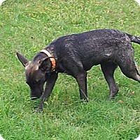 Adopt A Pet :: Sage - Jennings, OK