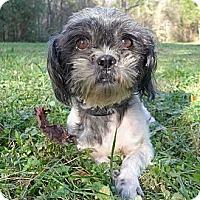 Adopt A Pet :: Salem - Mocksville, NC