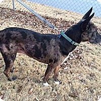 Adopt A Pet :: *ZOEY - Winder, GA