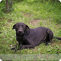 Adopt A Pet :: Miss Pooh - Lewisville, IN