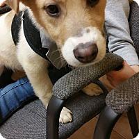 Adopt A Pet :: Jasper - Fenton, MI