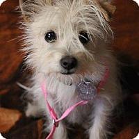 Adopt A Pet :: Pixie - Fillmore, CA