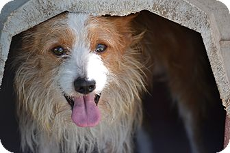 Terrier (Unknown Type, Small) Mix Dog for adoption in Pikeville, Maryland - Squirrel