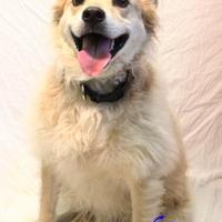 Adopt A Pet :: Cuban - Bradenton, FL