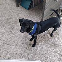 Adopt A Pet :: Dakota and Chanel - Clarksville, TN