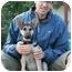 Photo 1 - German Shepherd Dog Puppy for adoption in Los Angeles, California - Noah von Christensen
