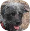 Terrier (Unknown Type, Small) Mix Dog for adoption in Eatontown, New Jersey - Rags