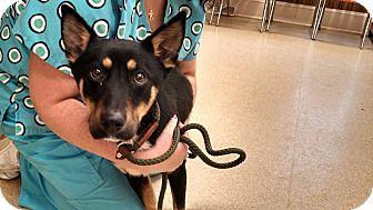 German Shepherd Dog Mix Dog for adoption in Thomasville, North Carolina - Lizzy