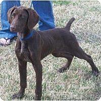 Adopt A Pet :: Olivia - Arlington, TX