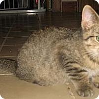 Adopt A Pet :: Joo - Acme, PA