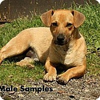 Adopt A Pet :: Samples - Maysel, WV
