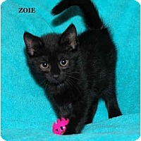Adopt A Pet :: Zoie - Catasauqua, PA