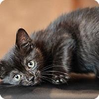 Adopt A Pet :: Sasha - Kalamazoo, MI
