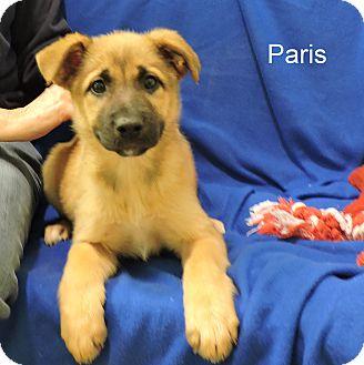 Shepherd (Unknown Type) Mix Puppy for adoption in Slidell, Louisiana - Paris