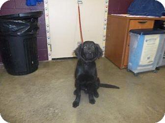 Border Collie Mix Dog for adoption in Rapid City, South Dakota - Sparrow