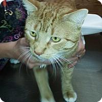 Adopt A Pet :: Tang - N. Billerica, MA