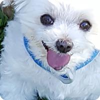 Adopt A Pet :: Dandy - Lancaster, TX