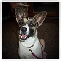 Adopt A Pet :: TRIXIE - Medford, WI