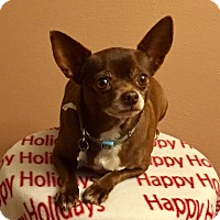 Adopt A Pet :: Chica--ADOPTED!! - Lynnwood, WA