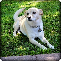 Adopt A Pet :: Mojo - Granbury, TX