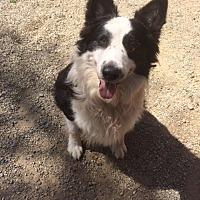 Adopt A Pet :: LEVI - San Pedro, CA