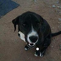 Adopt A Pet :: Levi - Dana Point, CA